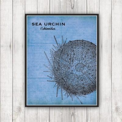 Sea Specimen Urchin Print