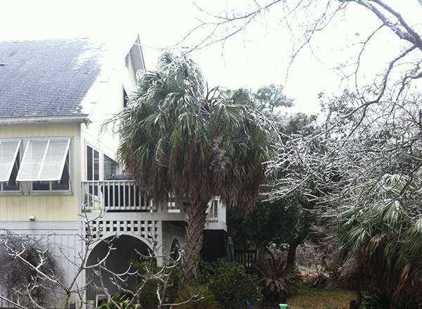 Ice Storm in North Carolina: I don't know if the palm trees are going to make it :(