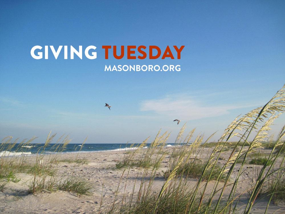 Giving Tuesday - Masonboro Island