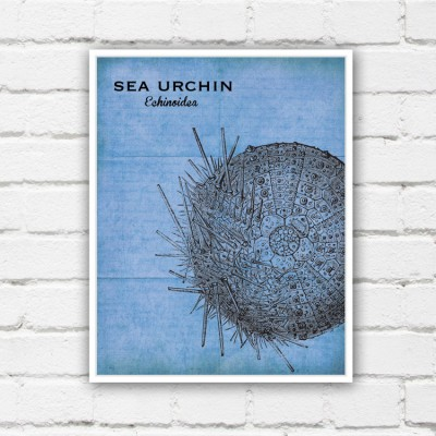 sea urchin print
