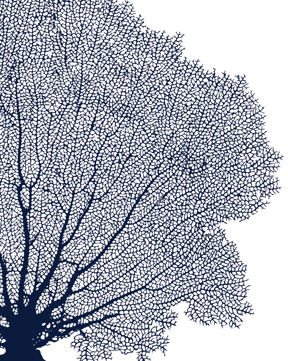 Sea fan coral diptych prints or canvases set of 2 sea fans in navy sea fan coral diptych prints or canvases set of 2 sea fans in navy blue publicscrutiny Images