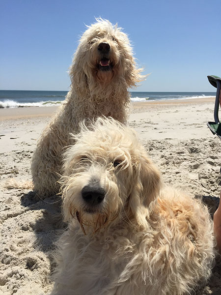 Bentley (standing) and Sunny (laying down)