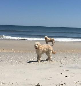 Sunny & Bentley